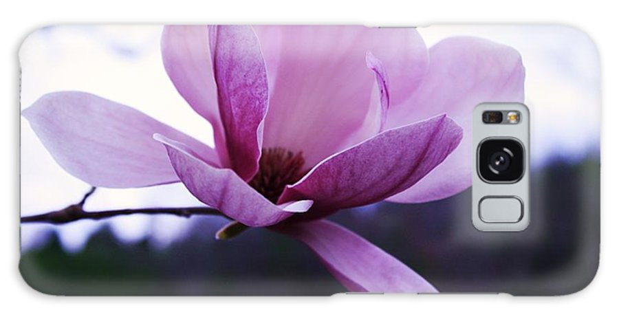 Tulip Tree Flower Galaxy S8 Case featuring the photograph Tulip Tree Blooming by Tia Patton