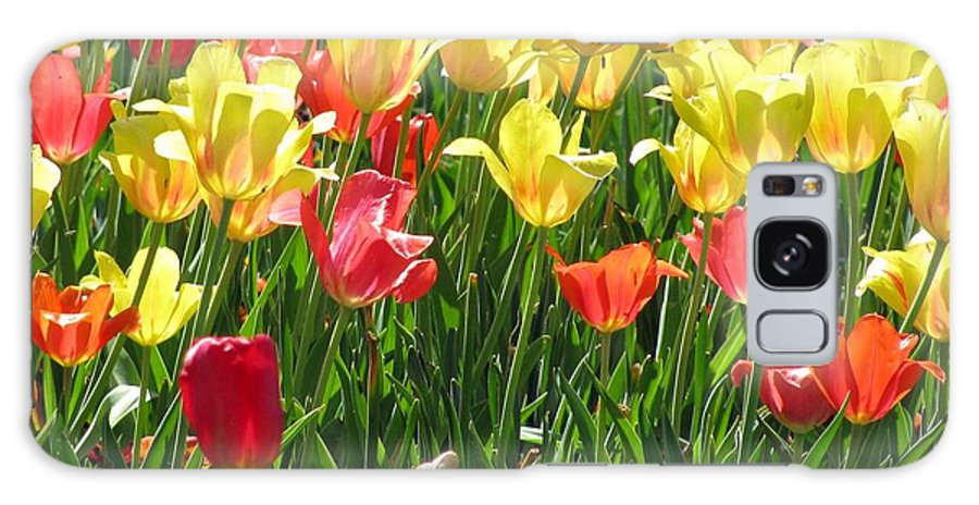 Tulip Galaxy S8 Case featuring the photograph Tulips - Field With Love 65 by Pamela Critchlow