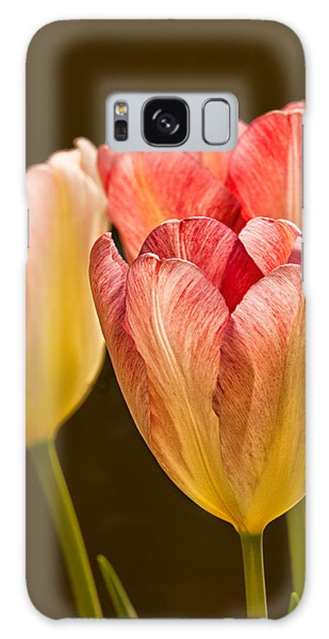 Tulips Galaxy S8 Case featuring the photograph Tulips In The Light by Rick Barnard