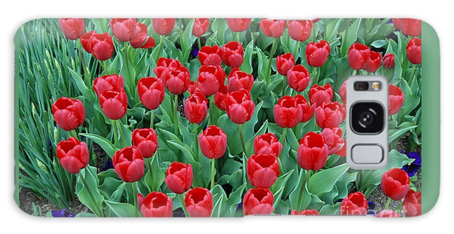 Tulip Galaxy S8 Case featuring the digital art Tulips Tulips And Tulips by Eva Kaufman