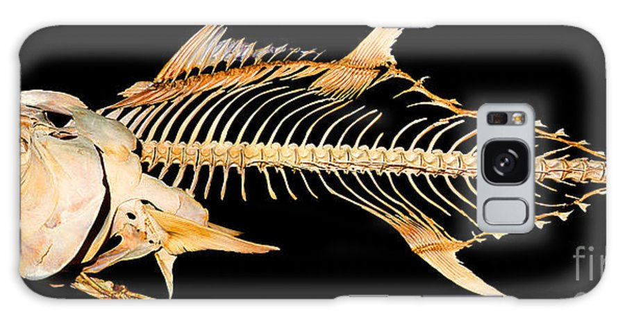 Tuna Fish Skeleton Galaxy S8 Case featuring the digital art Tuna Fish Skeleton by Wernher Krutein