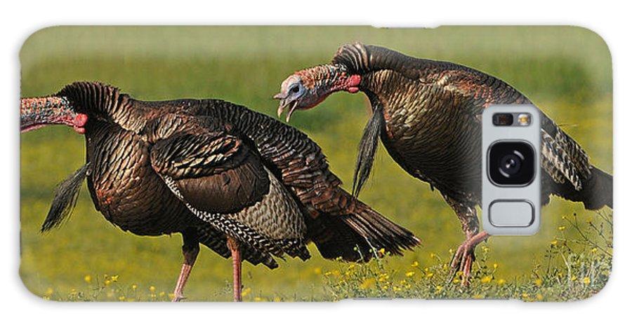 Wild Turkey Galaxy S8 Case featuring the photograph Turkey Gobble by Sue Jarrett
