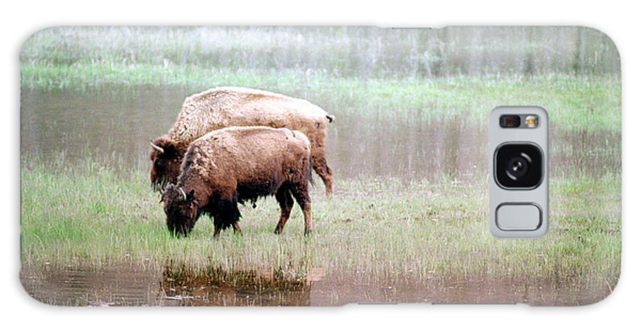Bison Galaxy S8 Case featuring the photograph Twin Bison by Todd Roach