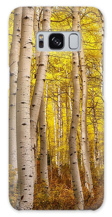 Autumn Galaxy S8 Case featuring the photograph Twisted In Yellow by Mitch Johanson