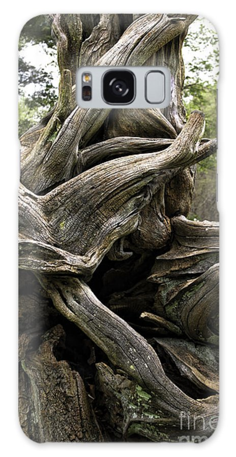 Art Galaxy S8 Case featuring the photograph Twisted Tree by John Cocchi