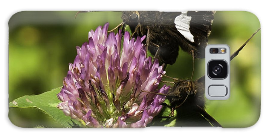 Silver-spotted Skipper Butterflies Galaxy S8 Case featuring the photograph Two Beautiful Butterflies by Thomas Young