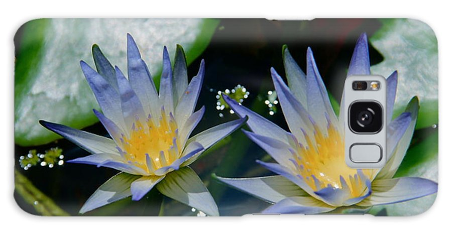 Water Lily Galaxy S8 Case featuring the photograph Two Blue Water Lilies by Deanne Rotta
