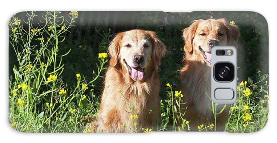 Adventure Galaxy S8 Case featuring the photograph Two Golden Retrievers Sitting Together by Zandria Muench Beraldo