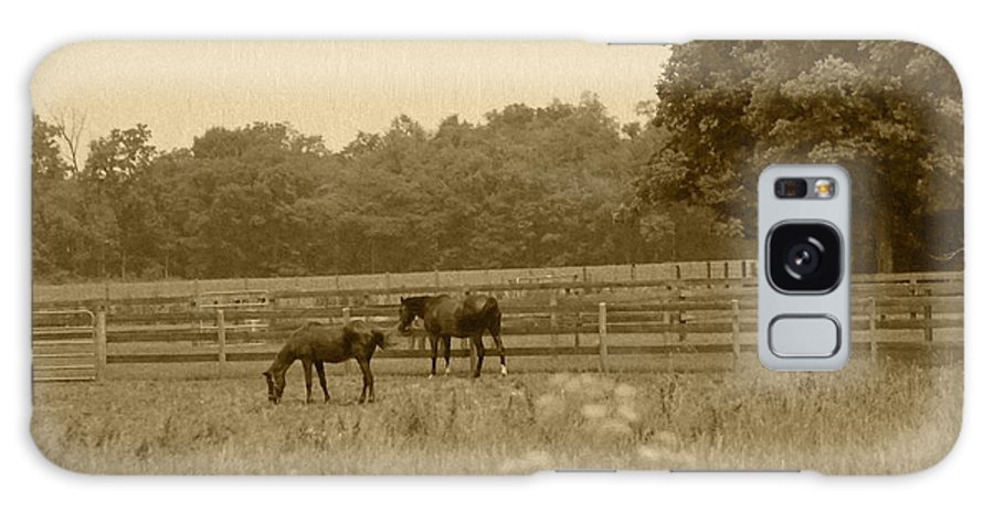 Two Horses Galaxy S8 Case featuring the photograph Two Horses by Minnie Davis