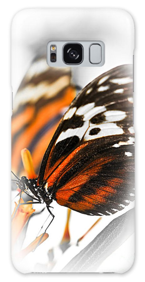 Danaidae Galaxy S8 Case featuring the photograph Two Large Tiger Butterflies by Elena Elisseeva