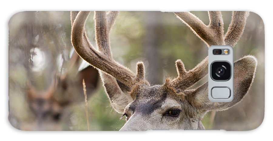 Adult Galaxy S8 Case featuring the photograph Two Mule Deer Bucks With Velvet Antlers by Stephan Pietzko