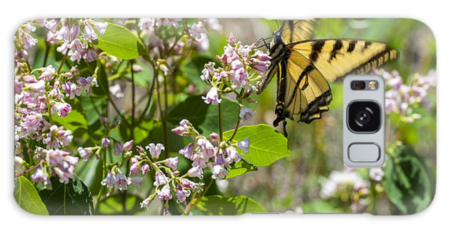 Butterfly Galaxy S8 Case featuring the photograph Two Tailed Swallowtail by Fran Riley