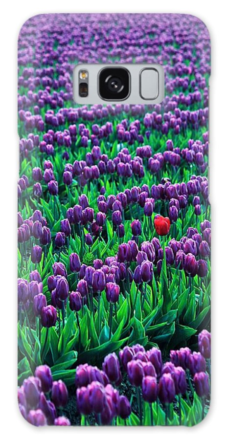 Tulips Galaxy S8 Case featuring the photograph Unique by Benjamin Yeager