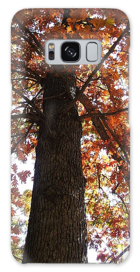Tree Galaxy Case featuring the photograph Up Fall by Minding My Visions by Adri and Ray