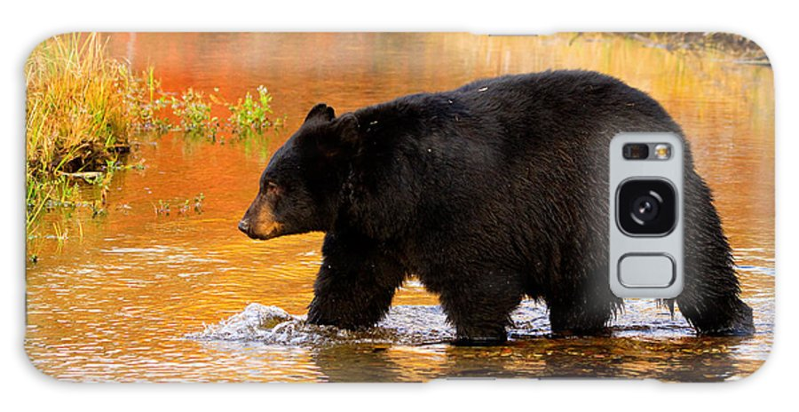 Black Bear Galaxy S8 Case featuring the photograph Up The Creek by Aaron Whittemore