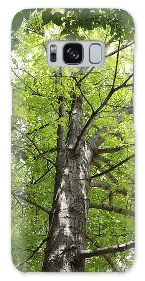 Tree Galaxy S8 Case featuring the digital art Up The Oak Tree by Vicki Podesta