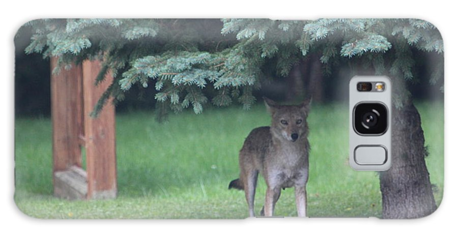This Coyote Was Taken In My Back Yard. Galaxy S8 Case featuring the photograph Urban Coyote by Christy Thompson