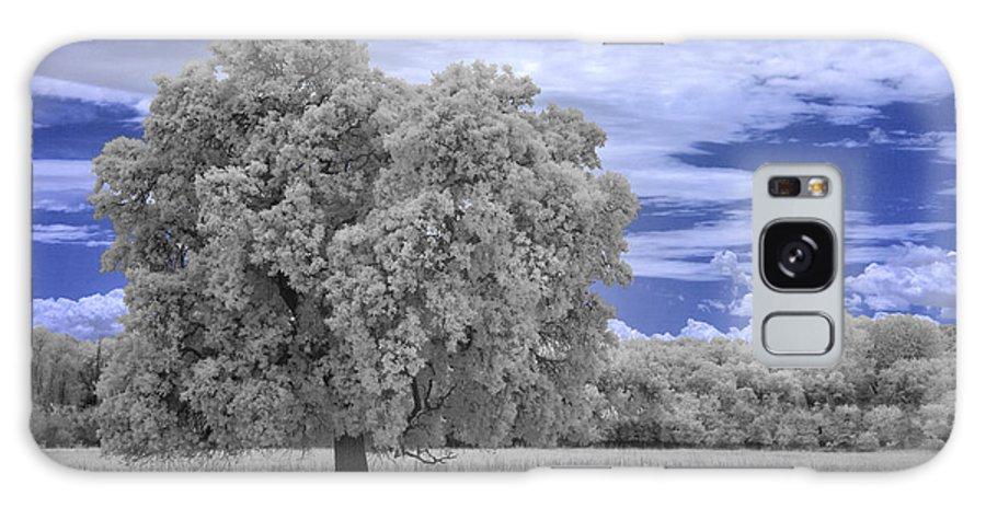 Oak Galaxy S8 Case featuring the photograph Valley Oak #2 by Alan Kepler