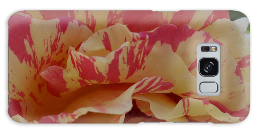 Yellow Galaxy S8 Case featuring the photograph Variegated Rose by Jacklyn Duryea Fraizer