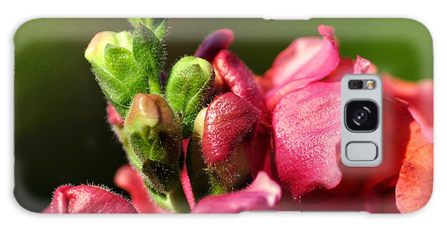 Photography Galaxy S8 Case featuring the photograph Variegated Snapdragon by Kaye Menner