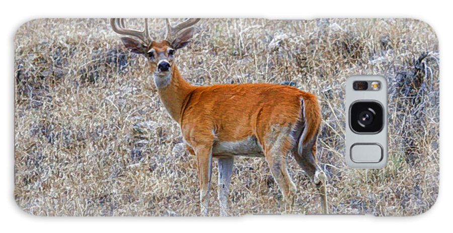 White Tailed Buck Galaxy S8 Case featuring the photograph Velvet White Tail by Steve McKinzie