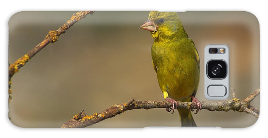 Greenfinch Galaxy S8 Case featuring the photograph Greenfinch by Guido Montanes Castillo