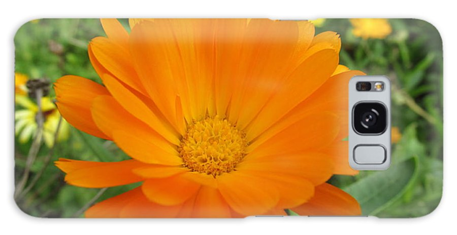 Flowers Galaxy S8 Case featuring the photograph Very Lovely Orange Bloom by Tina M Wenger