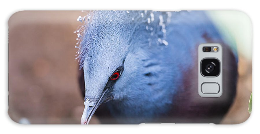 Victoria Crowned Pigeon Galaxy S8 Case featuring the photograph Victoria Crowned Pigeon by Phil Abrams