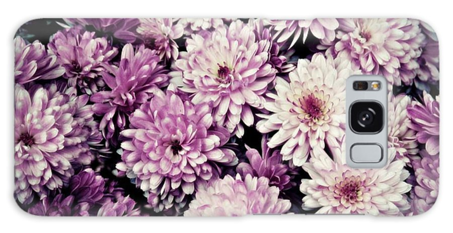 Violet Galaxy S8 Case featuring the photograph Violet Mums by Patricia Strand