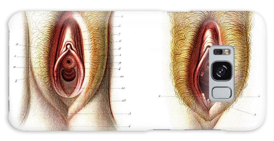 Virgin vagina