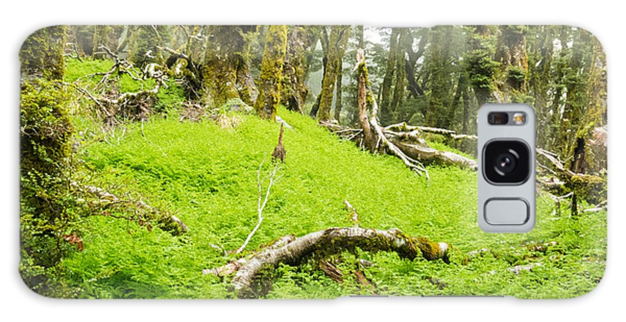 Marlborough Galaxy S8 Case featuring the photograph Virgin Mountain Rainforest Of Marlborough Nz by Stephan Pietzko