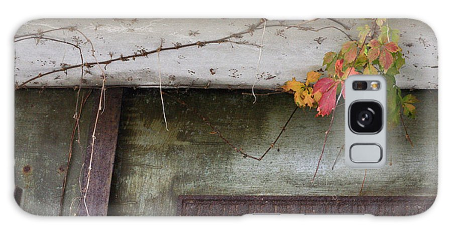 Virginia Creeper Galaxy S8 Case featuring the photograph Virginia Creeper In Fall Colors by Tamara Gentuso