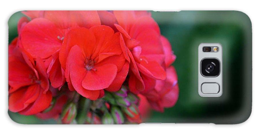 Vividly Red Geranium Galaxy S8 Case featuring the photograph Vividly Red Geranium by Maria Urso