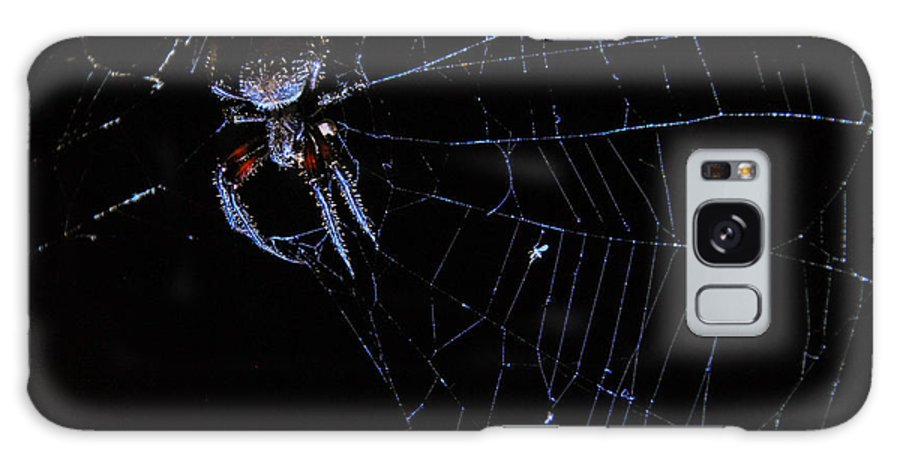 Spider Galaxy S8 Case featuring the photograph Waiting For Dinner by Sherri Quick