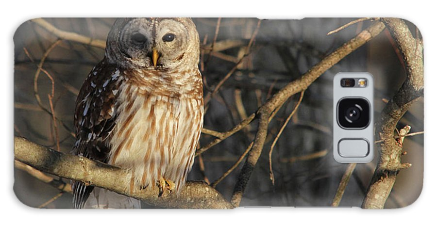 Barred Owl Galaxy S8 Case featuring the photograph Waiting For Supper by Lori Deiter