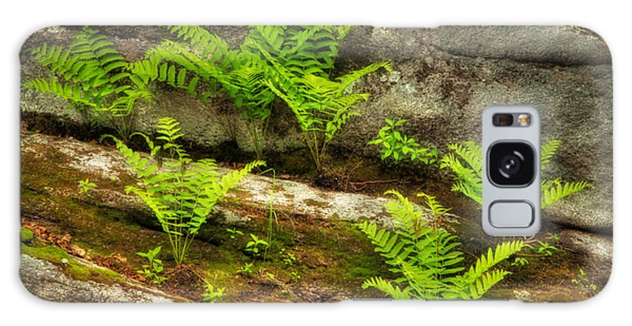 Nature Galaxy S8 Case featuring the photograph Ferns by Alana Ranney