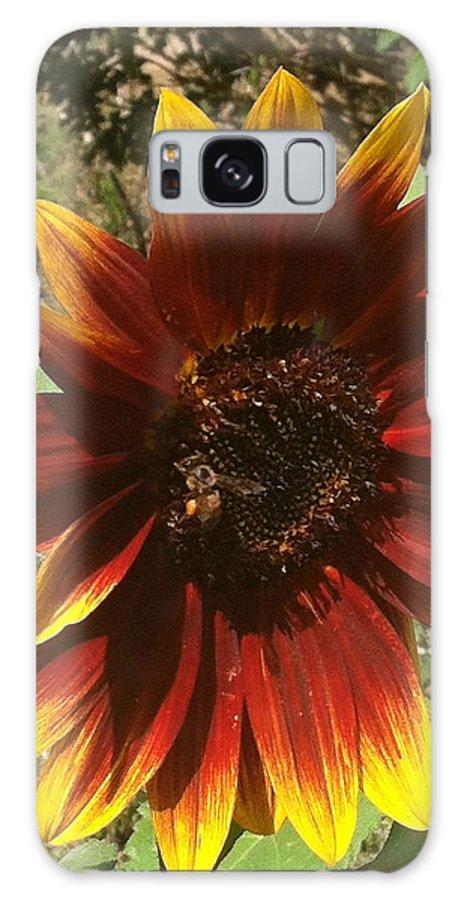 Flowers Galaxy S8 Case featuring the photograph Warm Sun Flower by William Hallett