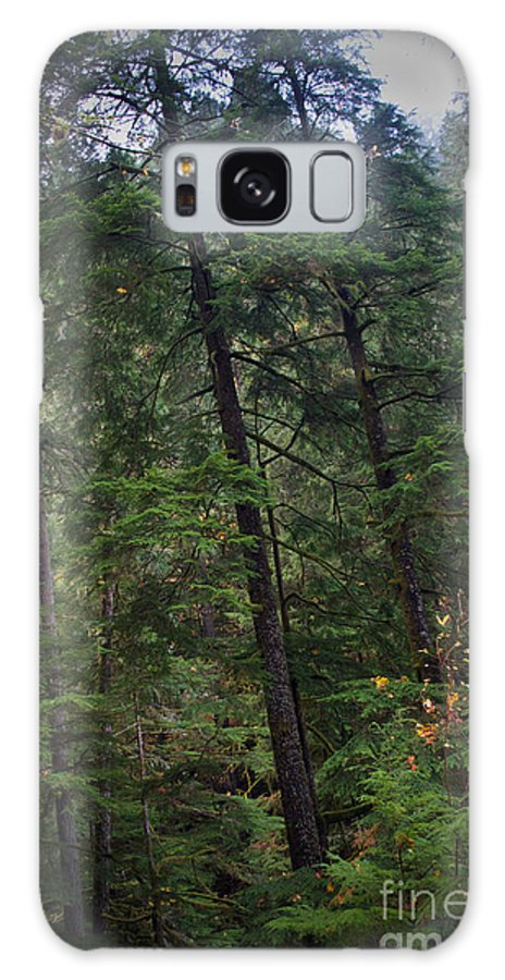 Washington Galaxy S8 Case featuring the photograph Washington Forest by Tina Wentworth