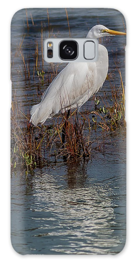 Great Egret Galaxy S8 Case featuring the photograph Watching by Charles Moore