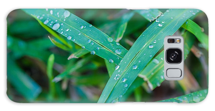 Water Galaxy S8 Case featuring the photograph Water Drops On The Grass 0004 by Terrence Downing