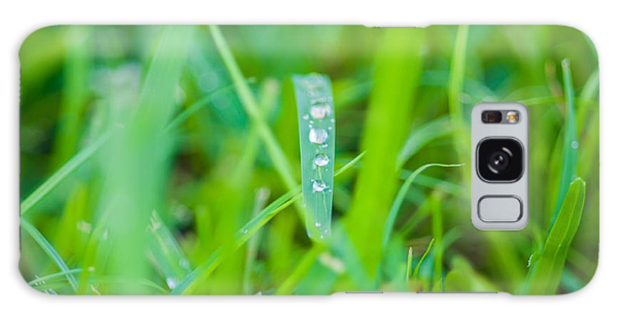 Water Galaxy S8 Case featuring the photograph Water Drops On The Grass 0020 by Terrence Downing