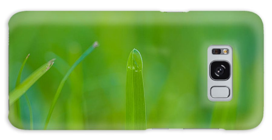 Water Galaxy S8 Case featuring the photograph Water Drops On The Grass 0023 by Terrence Downing