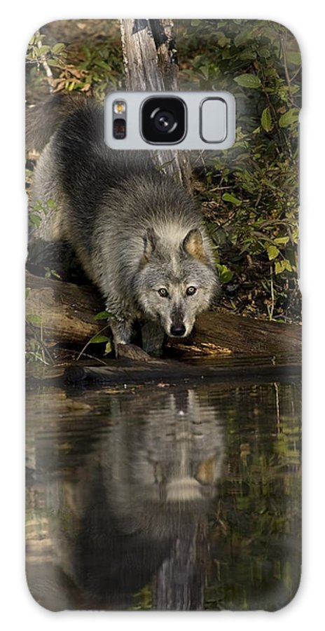 Wolf Galaxy S8 Case featuring the photograph Water Hole by Jack Milchanowski