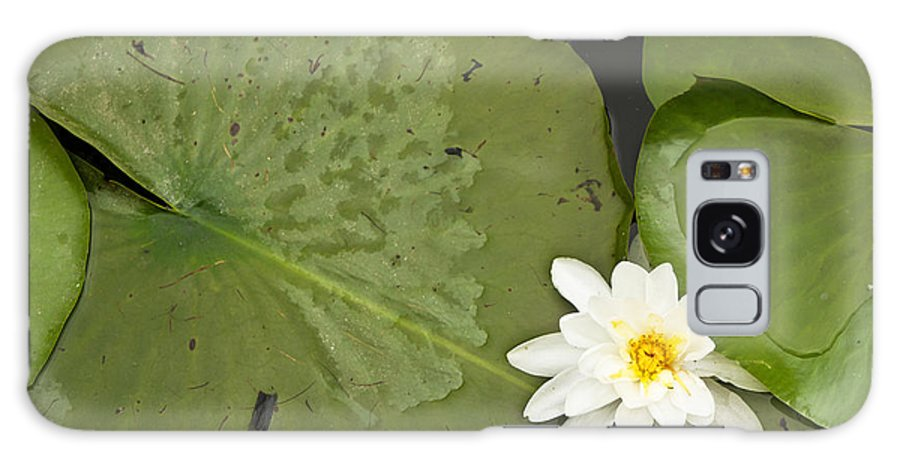 Lily Galaxy S8 Case featuring the photograph Water Lily 1 by Mary Bedy