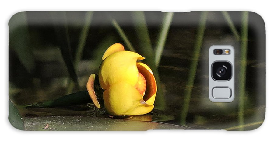 Lily Galaxy S8 Case featuring the photograph Water Lily Bud by Marilee Noland