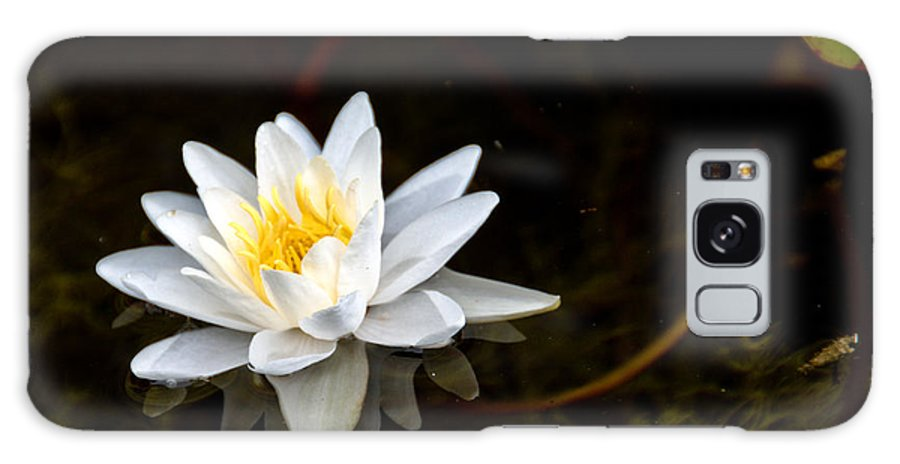 Lily Galaxy S8 Case featuring the photograph Water Lily by Cheryl Baxter