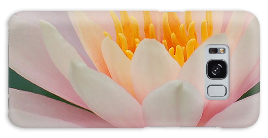 Pink Galaxy S8 Case featuring the photograph Water Lily II - Close Up by Suzanne Gaff