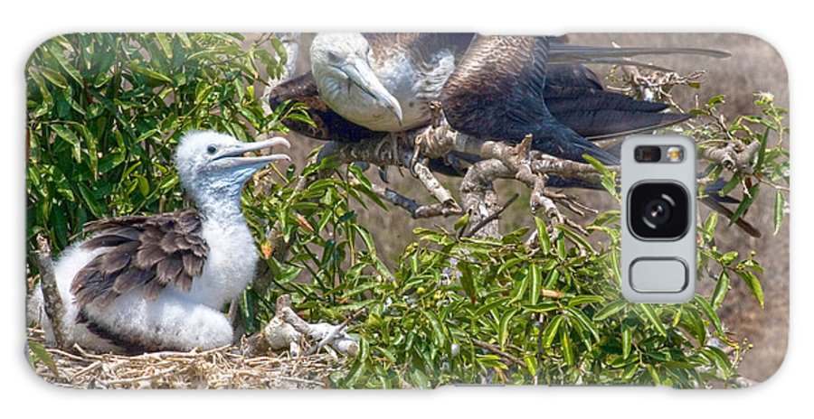 Waved Albatross Galaxy S8 Case featuring the photograph Waved Albatross And Young by Mike Fisher