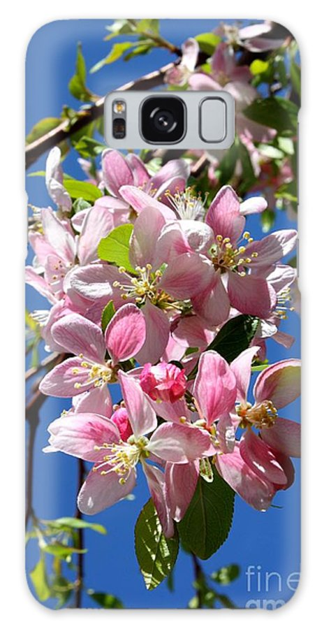Weeping Cherry Tree Blossoms Galaxy S8 Case featuring the photograph Weeping Cherry Tree Blossoms by Carol Groenen