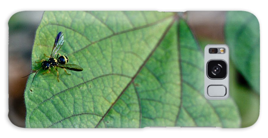 Insect Galaxy S8 Case featuring the photograph Well Dressed Hymenopteran by Douglas Barnett